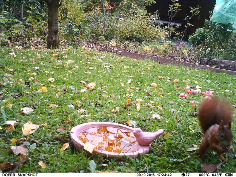 Frau Eichhörnchen